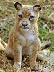 Needle Felted Lioness by YuliaLeonovich
