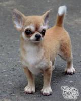 Needle felted Chihuahua by YuliaLeonovich