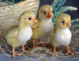 Needle Felted Chickens by YuliaLeonovich