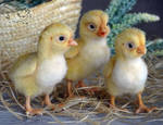 Needle Felted Chickens