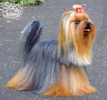 Needle Felted Yorkshire Terrier by YuliaLeonovich