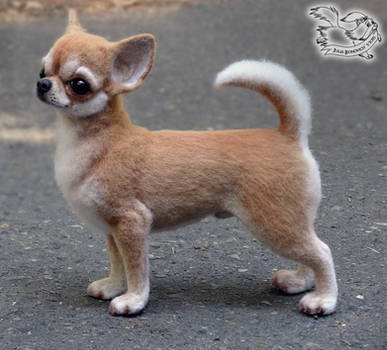 Needle felted Chihuahua
