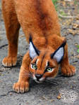 Needle Felted Caracal