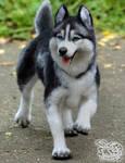 Needle Felted Siberian husky