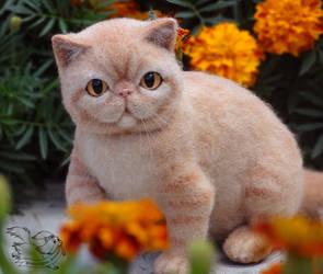 Needle Felted Cat Exotic Shorthair by YuliaLeonovich