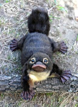 Toy platypus cub