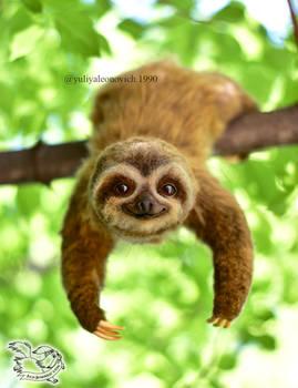 Toy Sloth