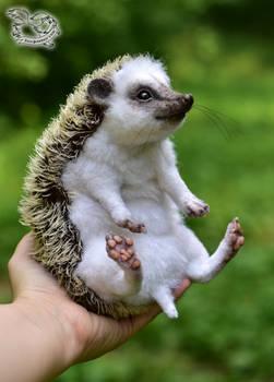 Toy hedgehog