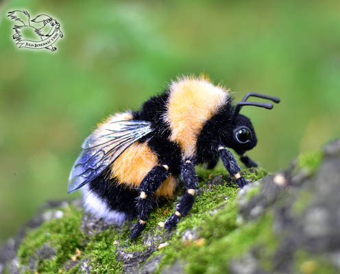 Toy bumblebee