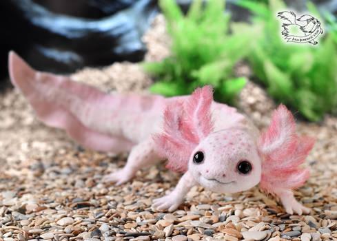 Axolotl toy