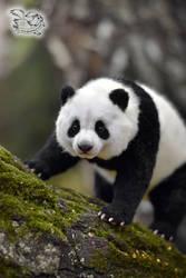 Panda toy by YuliaLeonovich