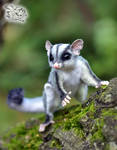 Sugar glider (petaurus breviceps) toy