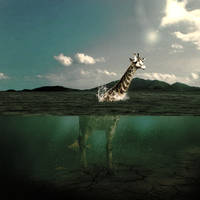 Water Giraffe by abvott