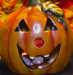 Ruby Halloween Pumkin 1 by creative1978