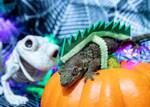 Nestle - Halloween 2018 - 5822