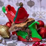 Velvet - Christmas Holly Shoe 2019 - 8946