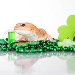 Alan - Saint Patricks Day 2021 - 8693
