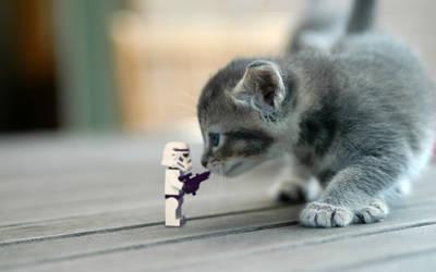 stormtrooper vs. cat by Kveldsvanger