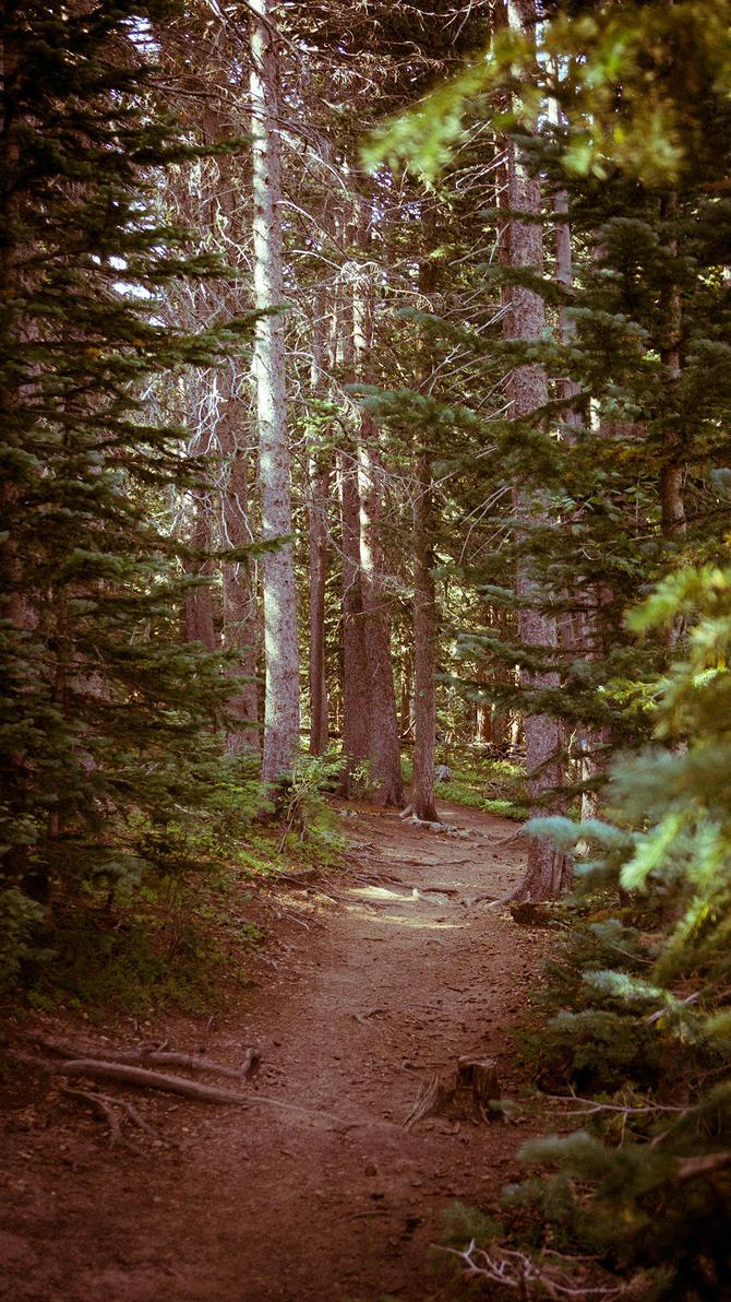 Sandia Crest Trail 130 by scottsmith17