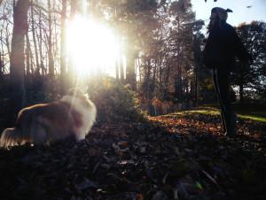 123boocatdog's Profile Picture