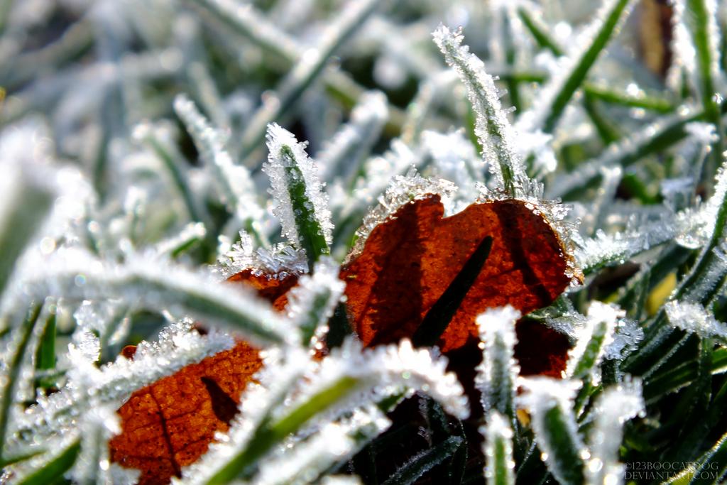 Frosty Grass by 123boocatdog