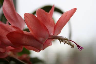 Hanging Flower by jack-skellington26