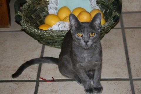 Pomfruit by redpolish