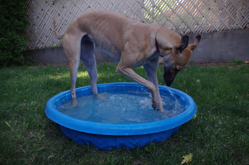 Greyhound Stock 13 by xSweet-blasphemyx