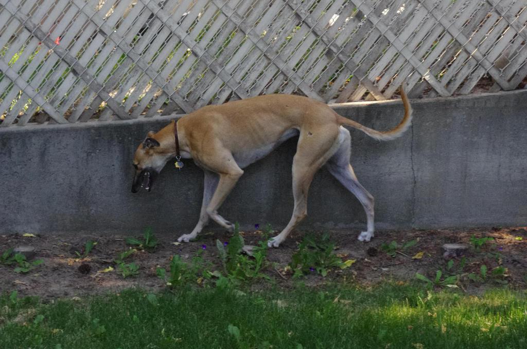 Greyhound Stock 3 by xSweet-blasphemyx