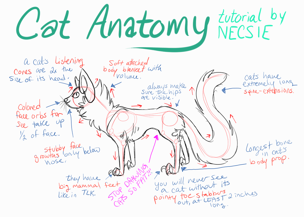 Proper Cat Anatomy - A Tutorial by Chrysisi on DeviantArt