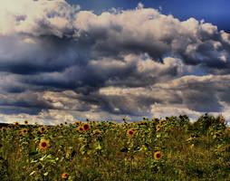 Sunflowers by MK-NI