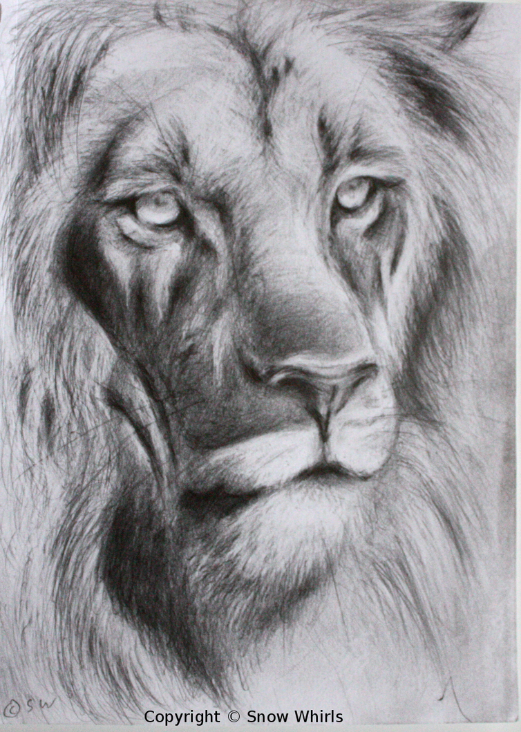 Lions face drawing - photo#21