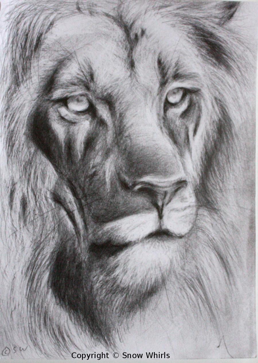 Uncategorized Lion Drawing Face lion face sketch by snowwhirls on deviantart snowwhirls