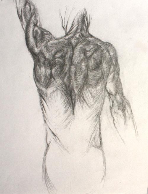 Muscle anatomy sketches 2 by SnowWhirls on DeviantArt