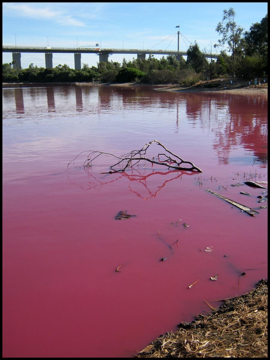 pink lake in melbourne by greenzaku on deviantart