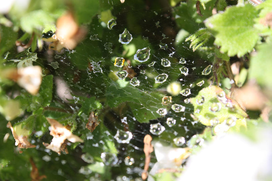Rain drops by thefaultinourstars