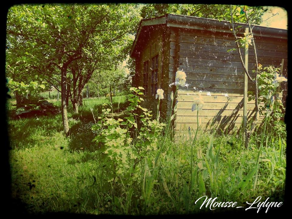 la cabane au fond du jardin by mousselylyne on deviantart. Black Bedroom Furniture Sets. Home Design Ideas