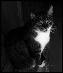 Old kitty...again!