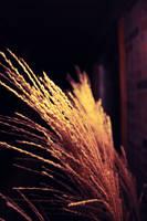 wheat by xposedbones