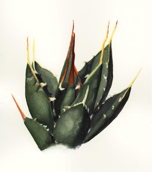 Agave utahensis traditional by Teela-B