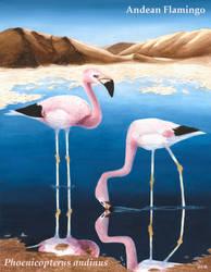 Losing Altitude - Andean Flamingo by Teela-B