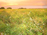 Creamfield