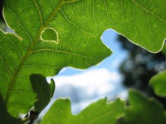 Oak-leaf by messtwice