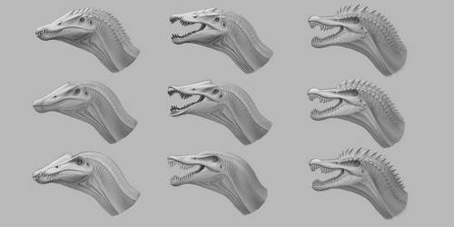 Spino heads