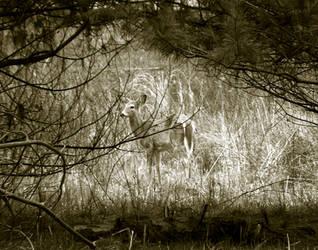 Deer in the Field by NebetSeta