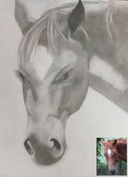 Horse #1 by NebetSeta