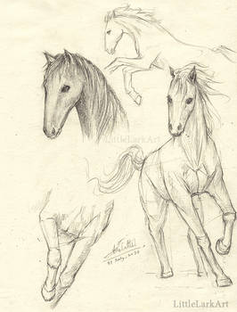 AYG project study sketch 01