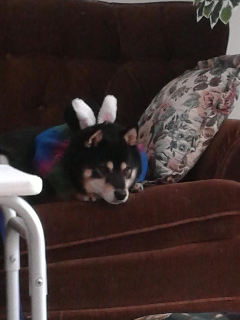 Depressed Easter Dog 2016 by chappy-rukia