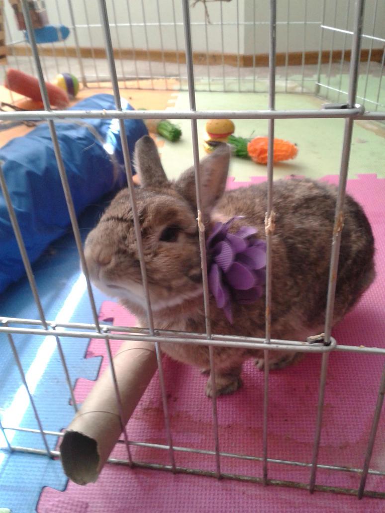 Easter Bunny Chappy 2016 by chappy-rukia