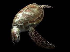 Turtle by gerardovalerio